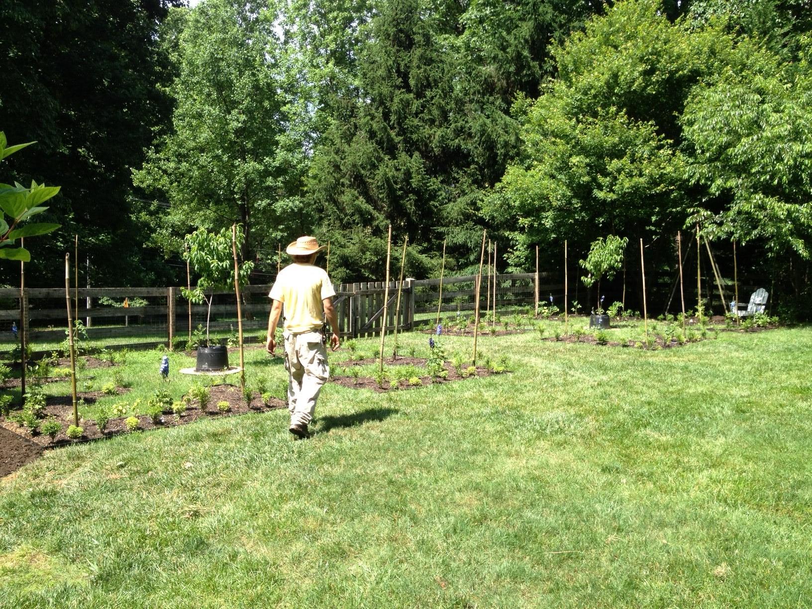 Formal kitchen garden under construction