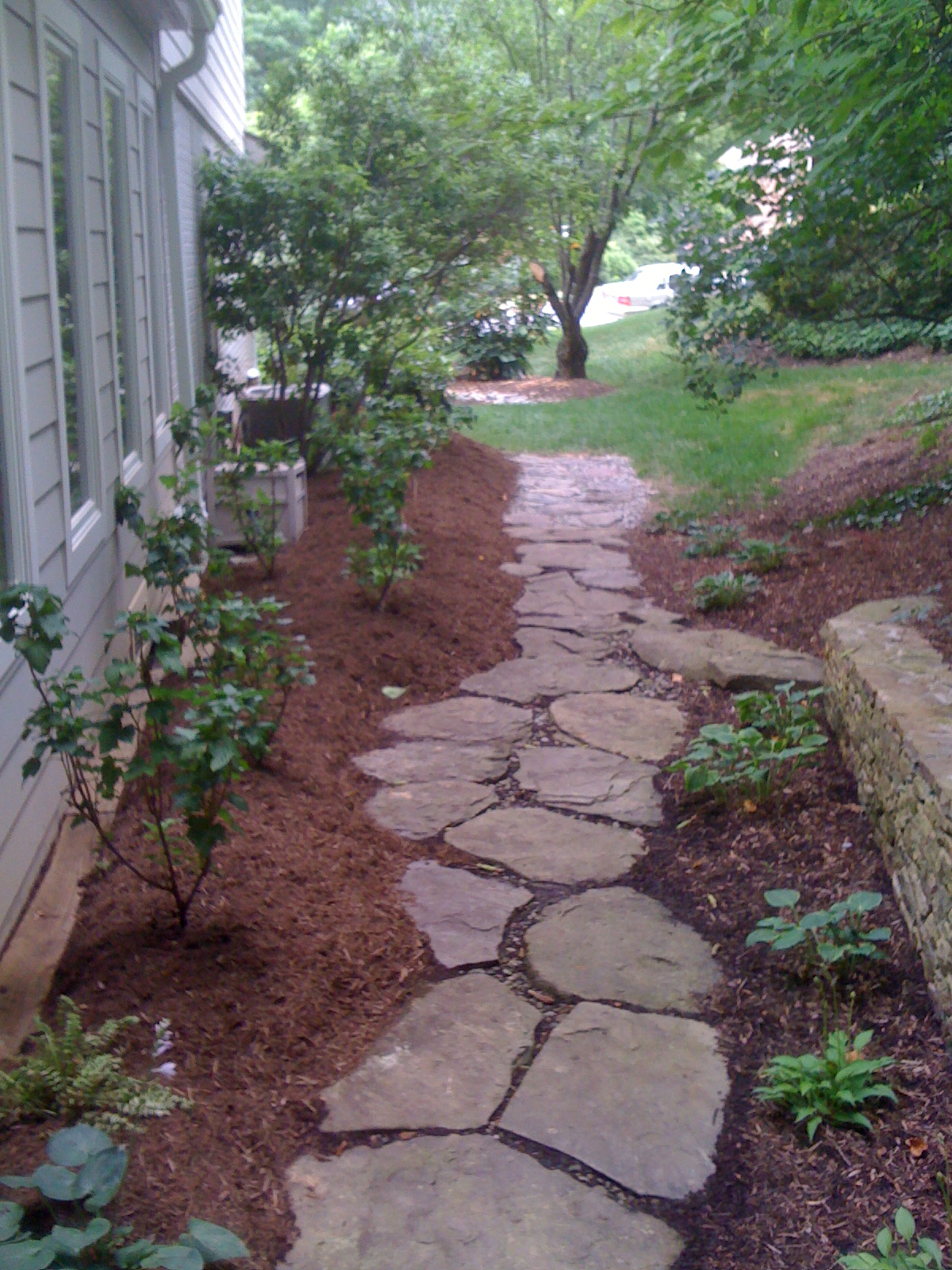 Side yard path with black currants and herbs