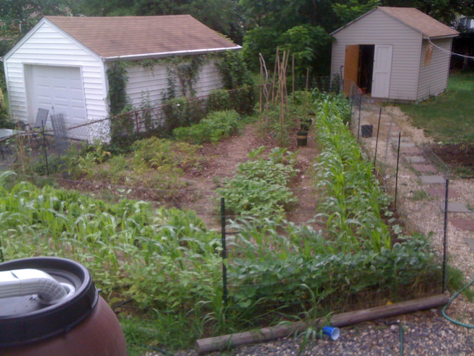 Intensely productive backyard garden, irrigated with rain barrels