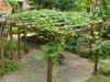 Kiwi and Grape Arbor