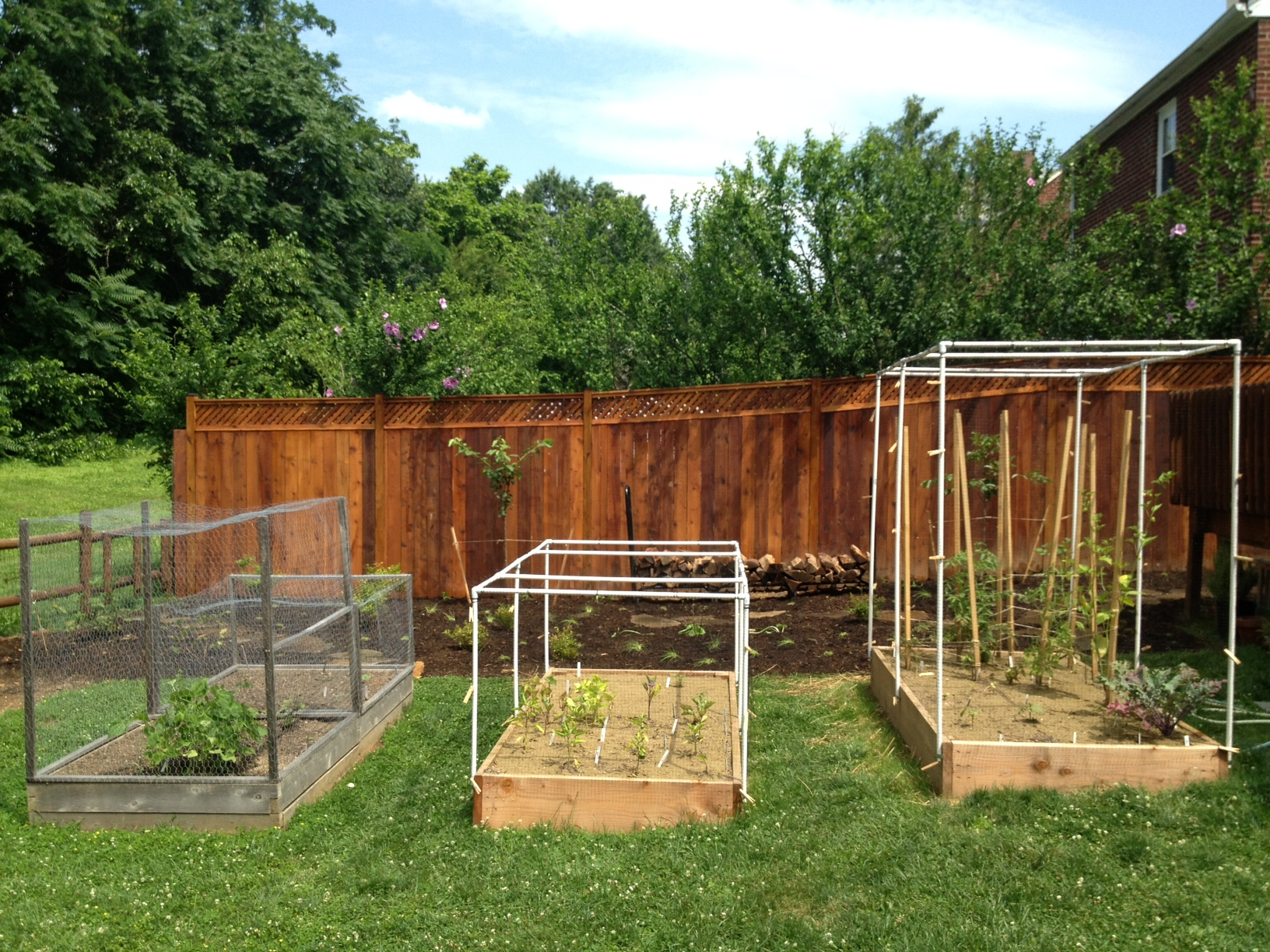 Raised vegetable beds and squirrel cages