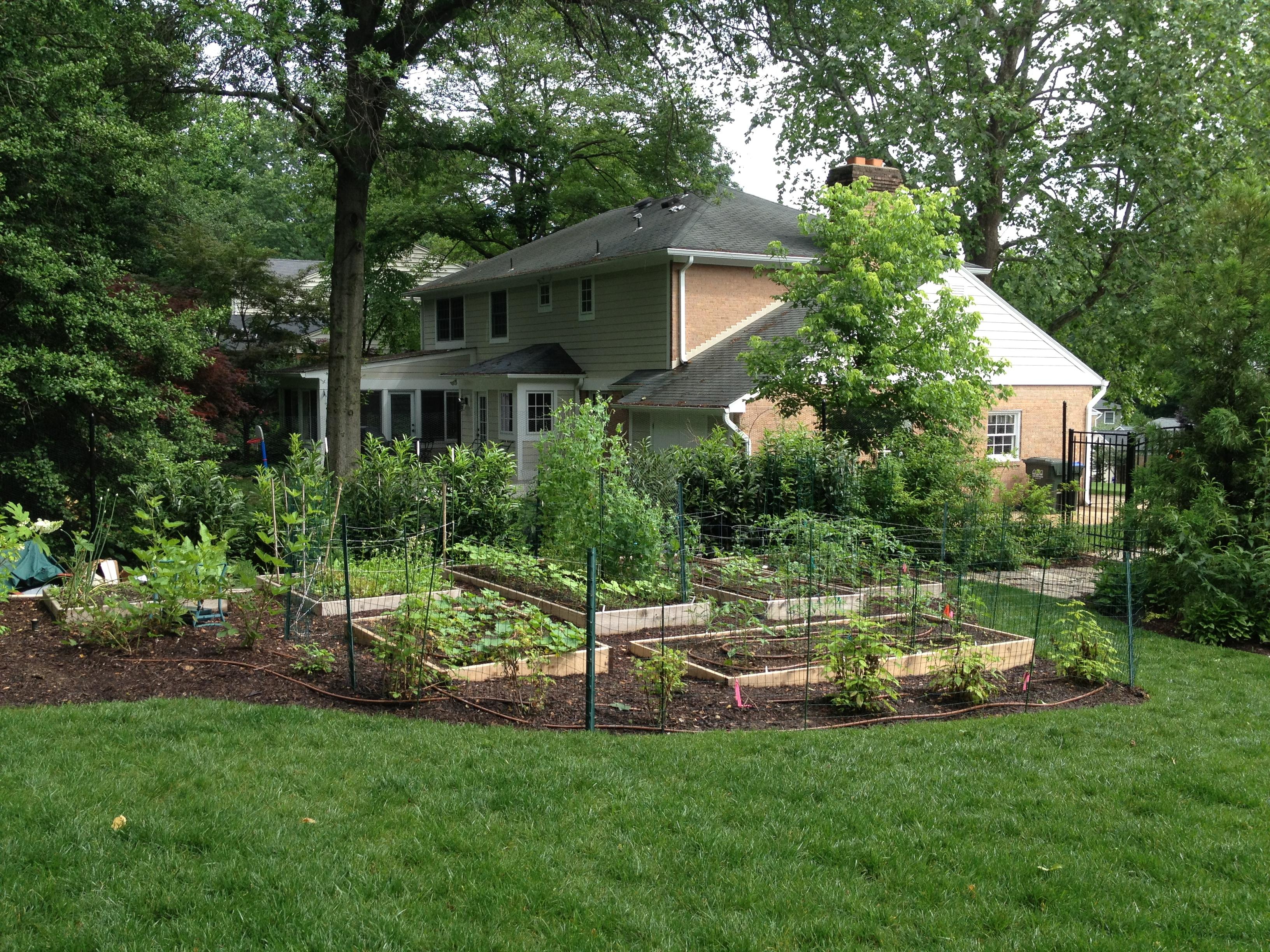 Backyard abundance!