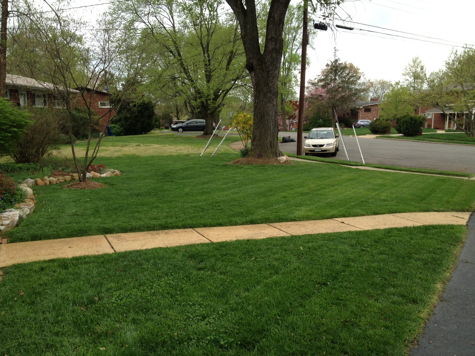 Lawn conversion to organic management