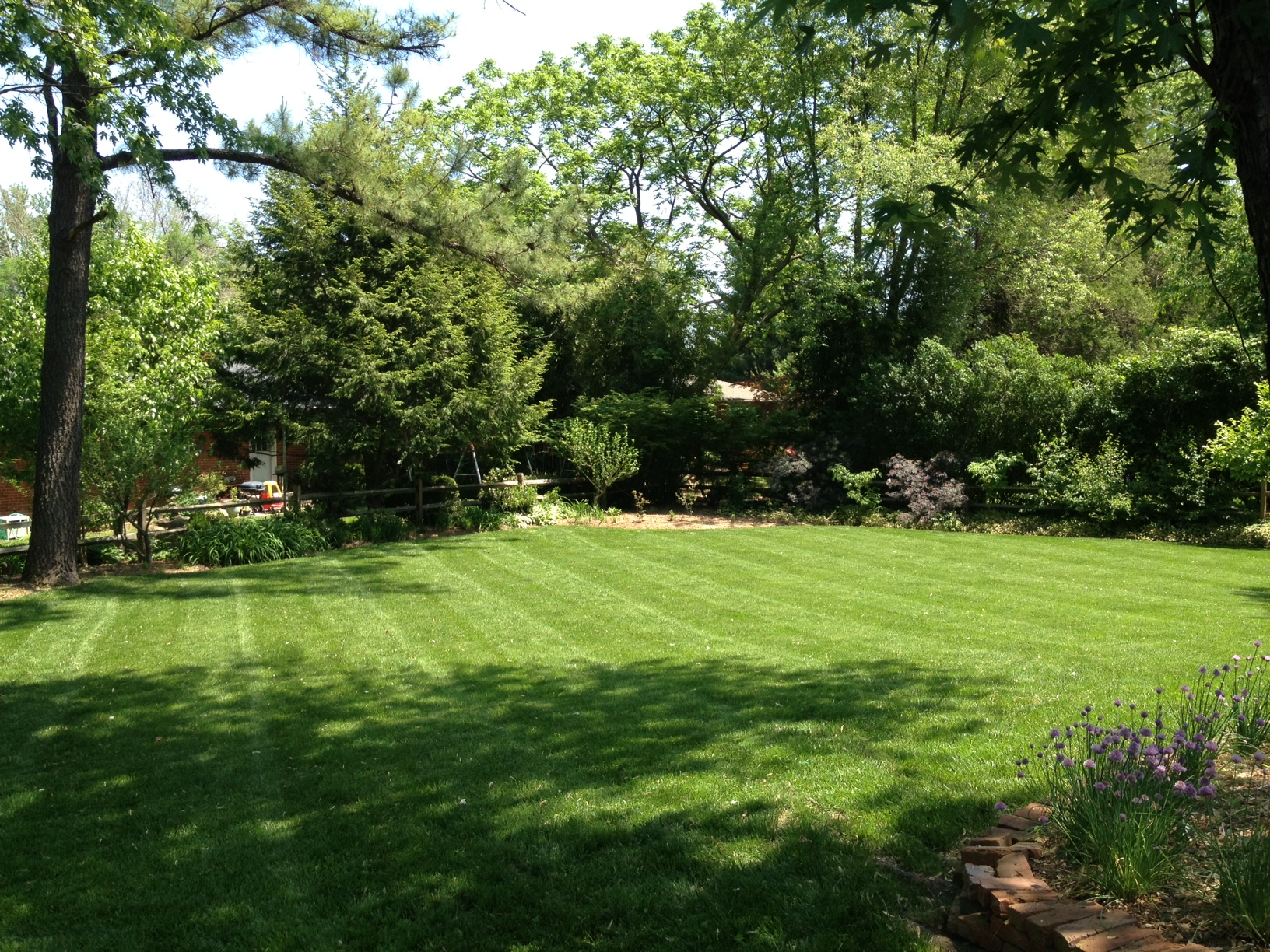 This organic lawn looks way better than its conventional neighbors!