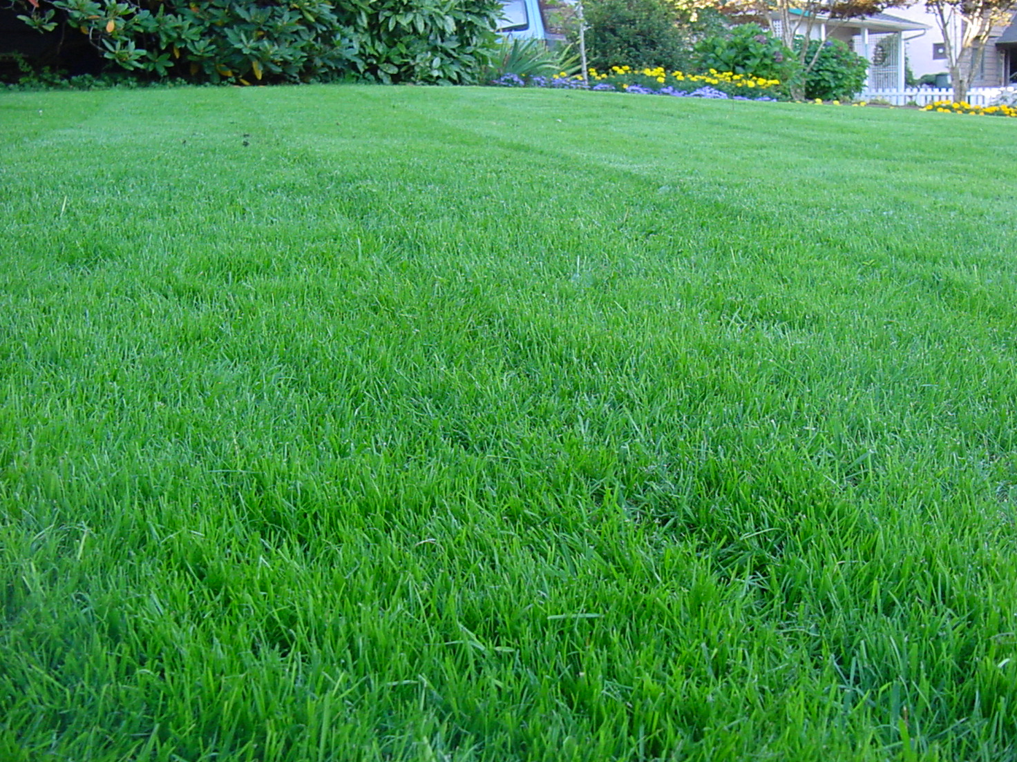 Lawn care the ecological way organic edible gardens llc for Best garden maintenance