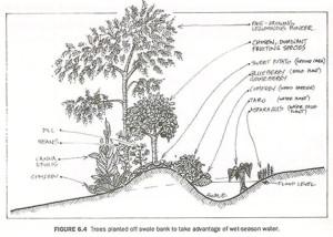 Rainwater-Harvesting Earthworks - Mollison Swale