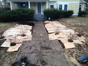 Mulch: Materials and Strategies